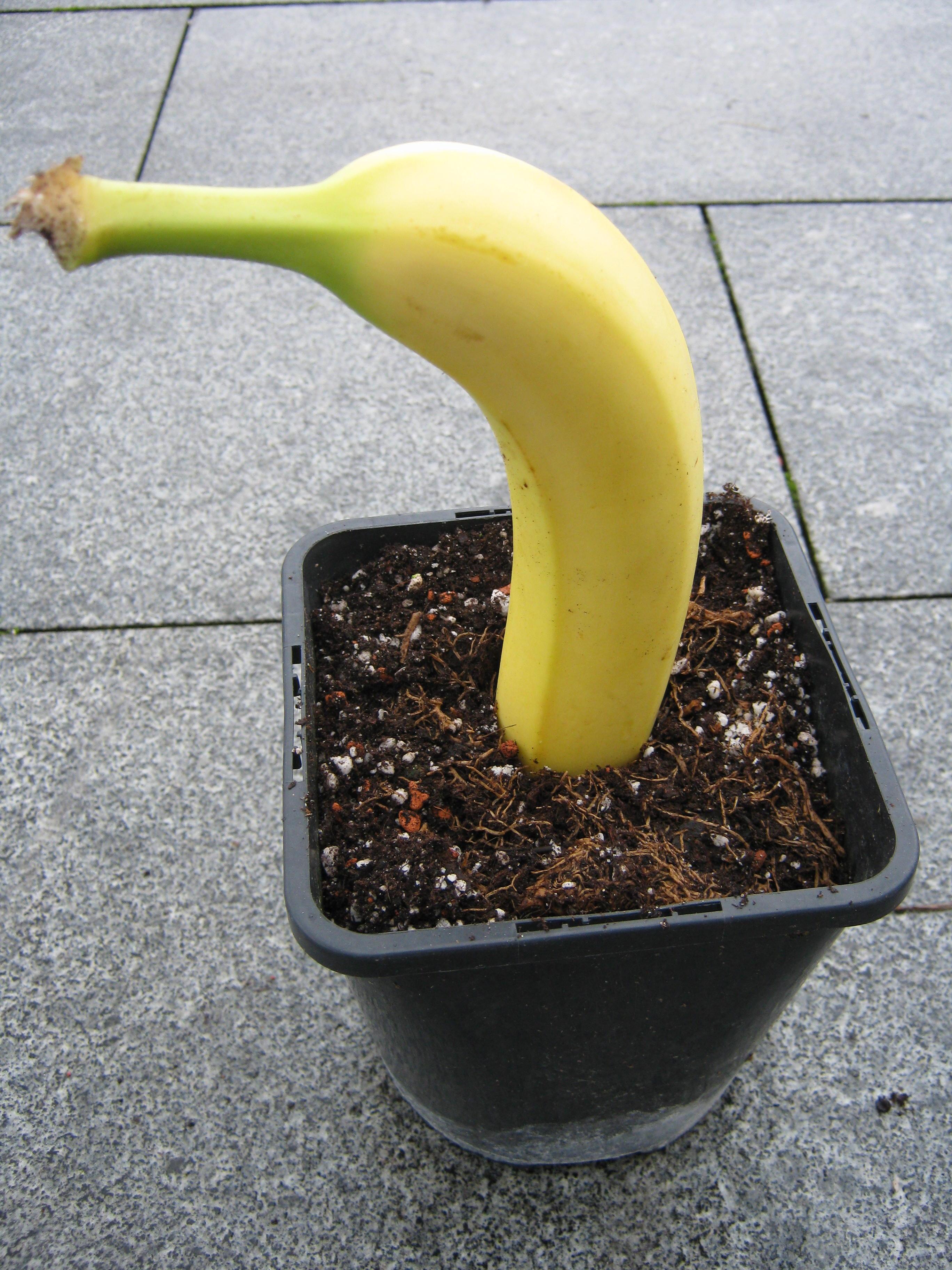 banane. Black Bedroom Furniture Sets. Home Design Ideas
