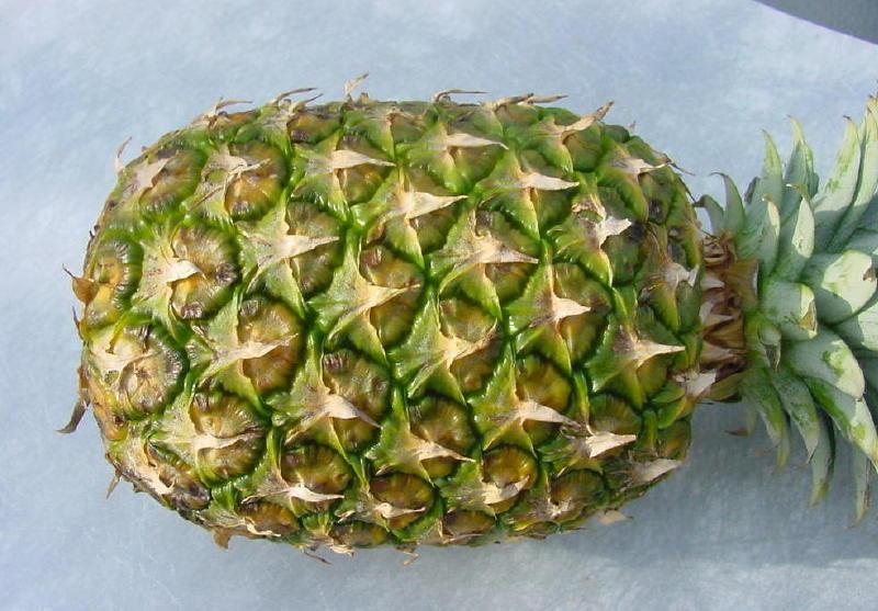 Grüne Ananas